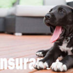 How Purchasing Pet Insurance May Actually Save You Money
